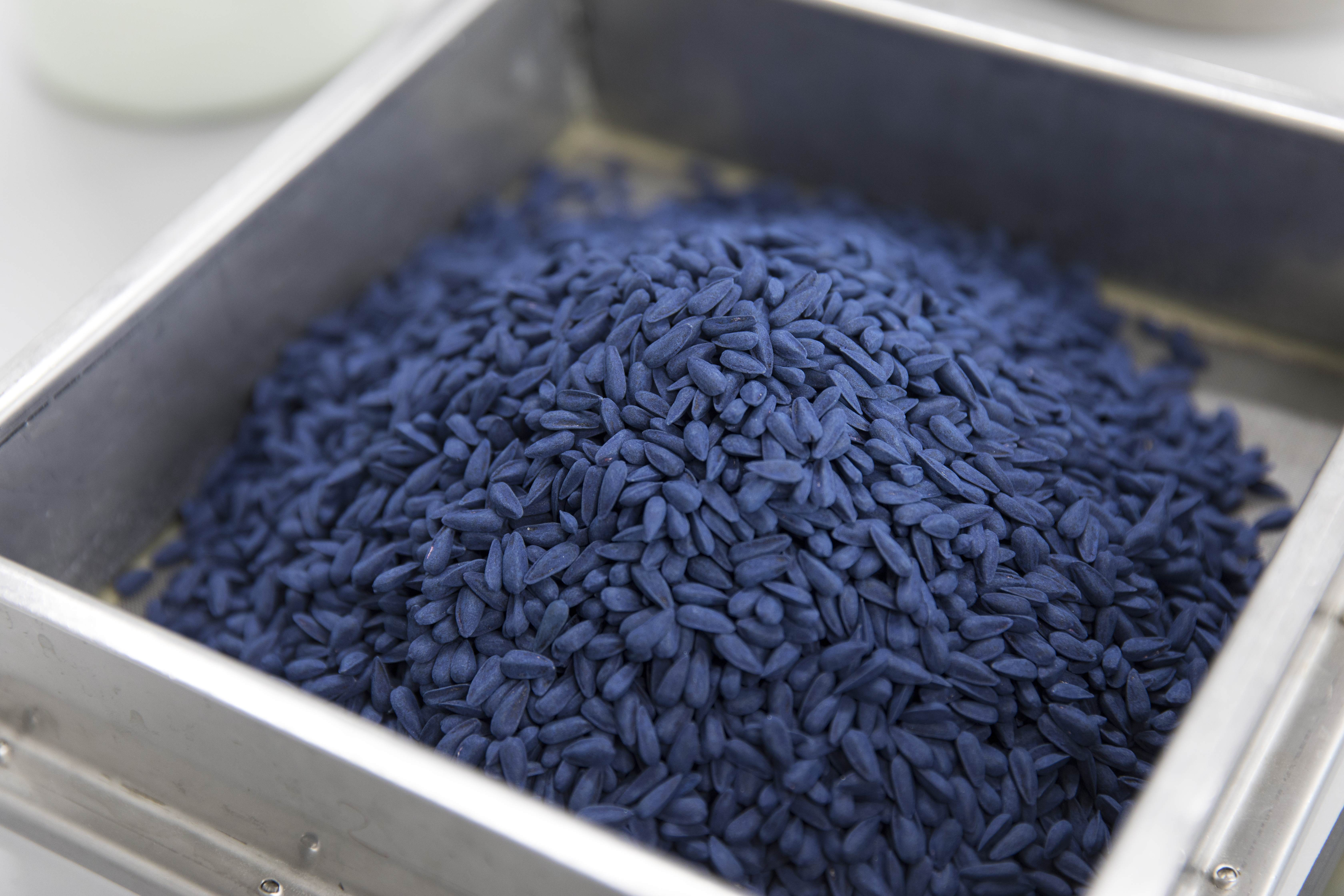 Encrusted blue sunflower seed